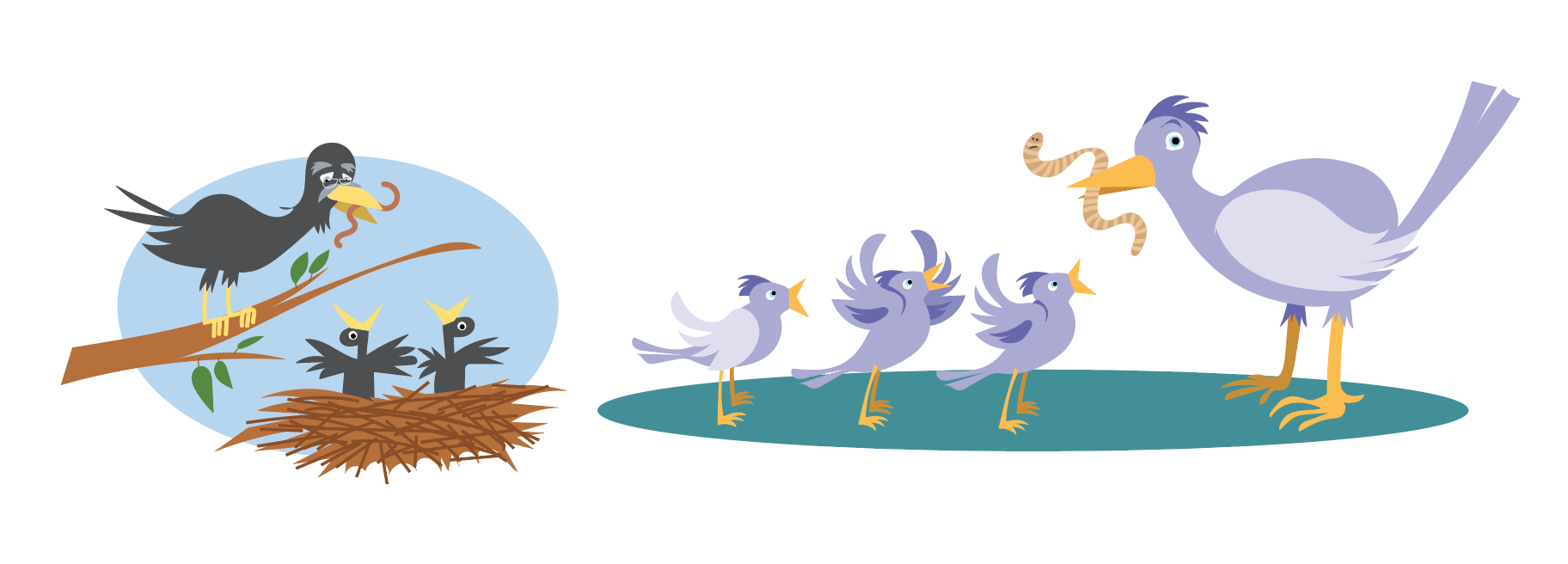 illustration oiseaux